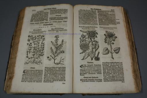 Matthioli / Verzascha, Neu vollkommenes Kräuter-Buch, Pflanzen-Holzschnitte, Basel, 1678
